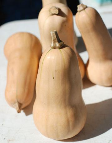 butternut-squash-